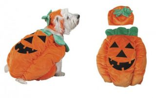 Pumpkin Costumes for Dogs Halloween Dog Costume with A Pumpkin Theme Cute