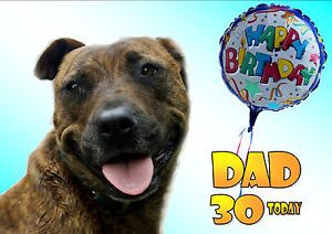 Personalised STAFFY Staffordishire Bull Terrier Dog Birthday Card Insert