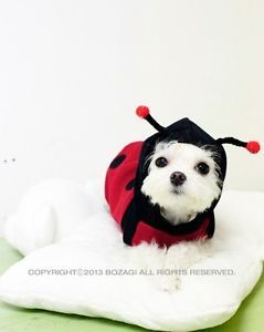 Pet Dog Cat Cotton Red Labybug Costume Hoodie Clothes Apparel XS s M L XL XXL