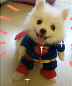 Cute Funny Pet Dog Cat Doggie Puppy Clothes Costume Superman Super Man Apparel